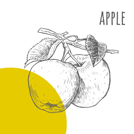 Apple vector freehand pencil drawn sketch. Two apples on branch with leaves illustration. Part of set of fruits sketchy drawings.