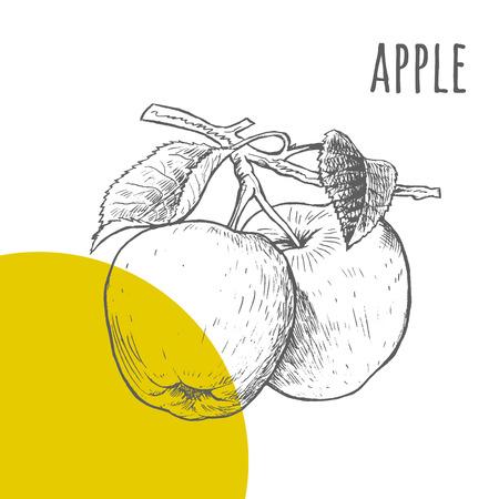 boceto: Manzana vector lápiz dibujado a mano alzada dibujo. Dos manzanas en rama con hojas ilustración. Una parte del conjunto de frutas dibujos esquemáticos. Vectores