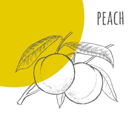 durazno: Peach vector lápiz dibujado a mano alzada dibujo. Ilustración de melocotones montón en la rama con hojas. Una parte del conjunto de frutas dibujos esquemáticos. Vectores