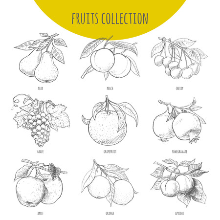 Fruits set vector freehand pencil drawn sketch. Illustration of fruits on branches with leaves. Pear, apple, cherry. grape, orange, pomegranate, apricot, grapefruit, peach.