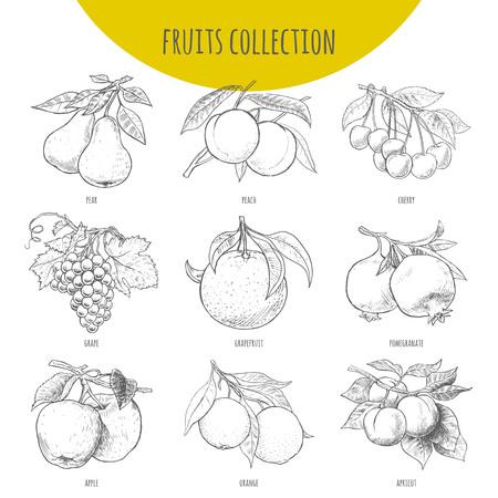 Fruits set Vektor freihändig Bleistift gezeichnete Skizze. Illustration von Früchten auf Zweige mit Blättern. Birne, Apfel, Kirsche. Trauben, Orangen, Granatapfel, Aprikose, Grapefruit, Pfirsich. Vektorgrafik