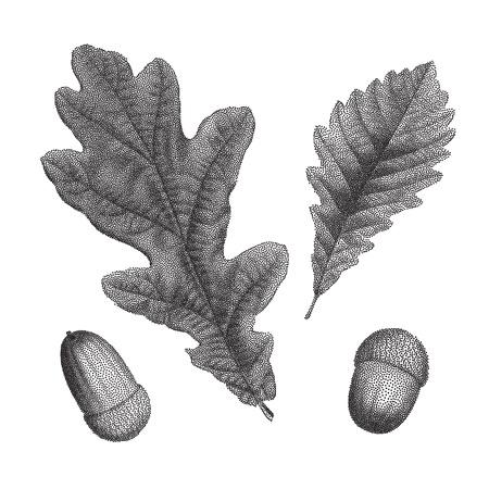 acorn seed: Black vintage engraving of autumn leaves on black background. Vector autumnal oak leaf and acorn retro illustration