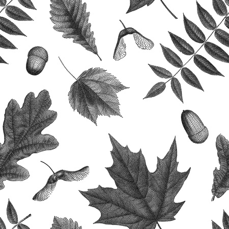 black and white leaf: Black vintage engraving of autumn leaves on white background. Seamless pattern. Vector autumnal oak, maple, acer, rowan leaf, acorn, maple keys seed, helicopters set collection. Illustration