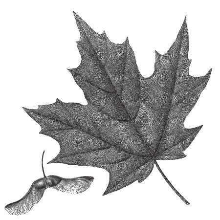 Nero vendemmia, incisione di foglie di autunno su sfondo nero. Vector autunno foglia d'acero e acero elicottero seme retrò illustrazione Vettoriali