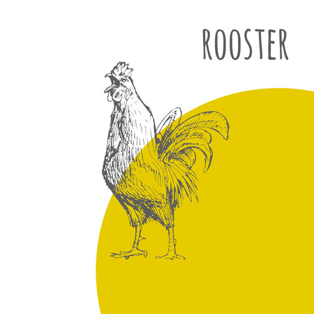 lunar calendar: Rooster cock. Vector isolated hand drawn pencil sketch rooster chicken with comb, hen, cockerel. Detailed feather drawing. Happy New Year 2017 symbol by chinese new year zodiac lunar calendar