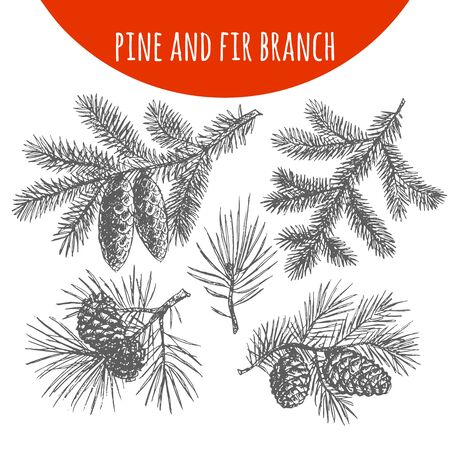 pencil drawing: Christmas pine, fir tree branches and cones sketch. Hand drawn pencil drawing elements for vector Christmas and New Year design