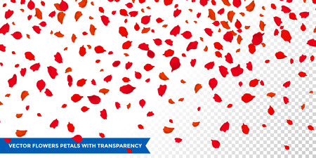 Flowers petals confetti falling on transparent background. Wedding, Women day or Valentine love red floral roses blossoms flying in wind whirl backdrop