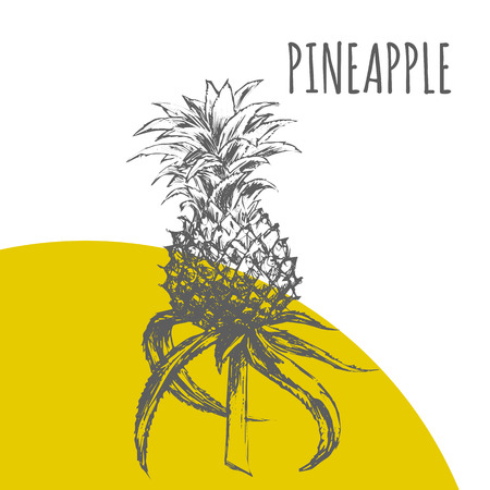 Pineapple or ananas vector sketch botanical plant illustration. Exotic tropical fruit sketch