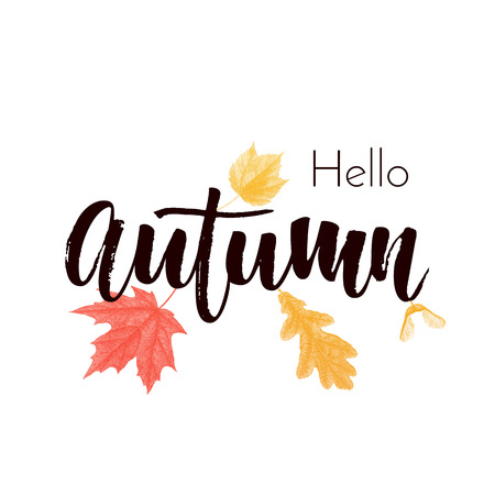 Hello Autumn text poster of September leaf fall or autumnal foliage of maple, oak acorn and elm for shopping sale design or promo poster and leaflet or web banner
