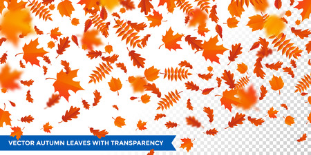 Autumn leaves failing pattern on transparent background.