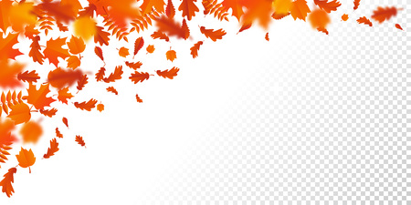 Autumn leaf fall or autumnal falling leaves pattern on transparent background. Vector orange foliage of maple, rowan or chestnut and poplar leaf flying in wind motion blur design for autumn design