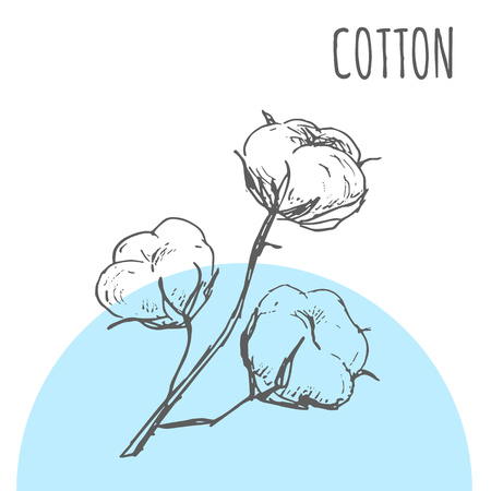 Cotton leaf vector sketch botanical plant for cotton cosmetic or textile product package design