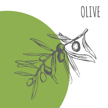 Olive vector sketch botanical plant for moisturizer or essential and cooking oil, herbal cosmetic and medicine package