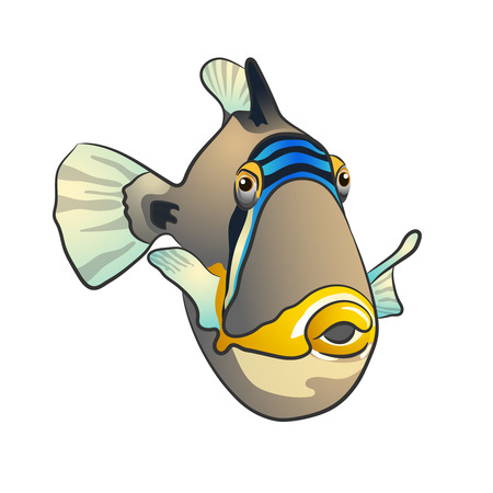 Picasso triggerfish isolated on white color