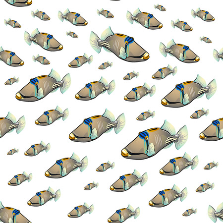 triggerfish: Picasso triggerfish pattern