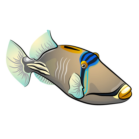 Picasso triggerfish. fish isolated on white background