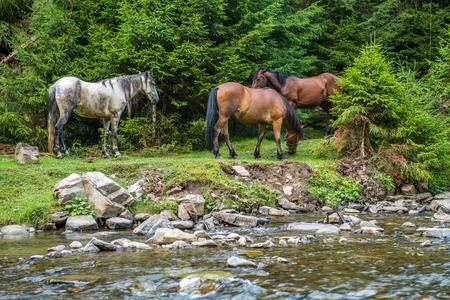 Horses graze near a mountain river