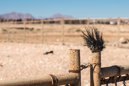 Dead sea urchin on a metal fence in desert. Blur background.
