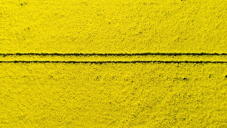 Aerial view of colorful rapeseed field in spring. Close-up.