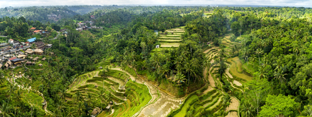 Aerial View of Tegallalang Bali Rice Terraces. Panorama.