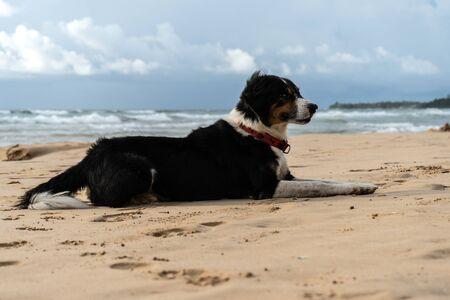 Beautiful dog lies on the sand near the ocean