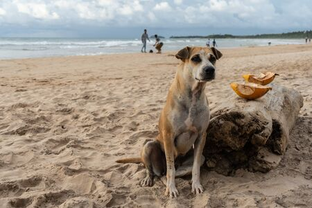 Homeless dog sits on the sand near the ocean. Reklamní fotografie