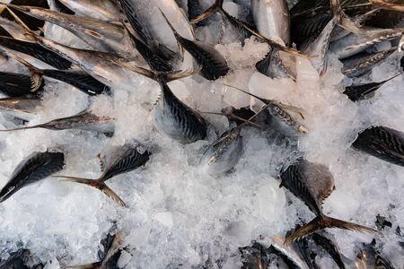 Street fish market. Fresh catch of fish in ice Reklamní fotografie