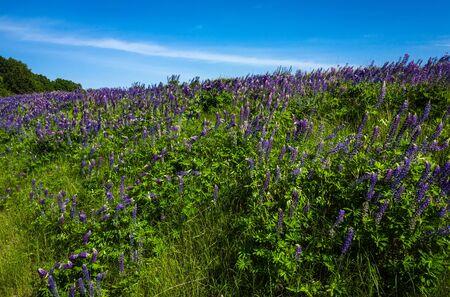 beautiful purple flowers blooming in nature, botanical garden