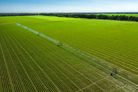 Agricultural irrigation system for irrigation of a corn field on a sunny summer day aerial view.