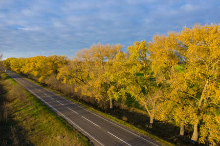 Asphalt road with fallen leaves in autumn at the sunset aerial view. 版權商用圖片