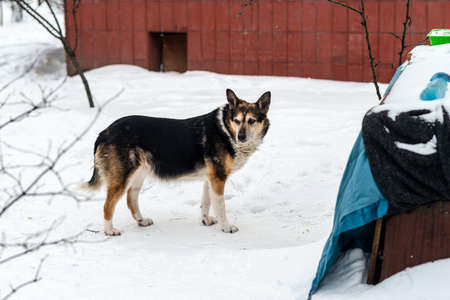Homeless dog in the winter
