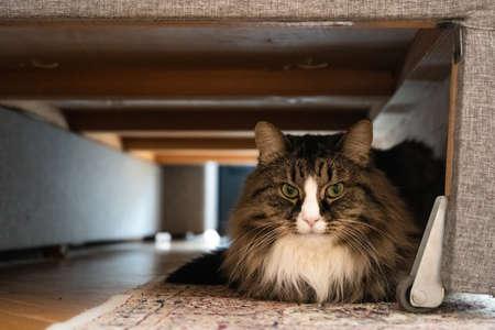 Cat sitting under the sofa