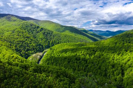 Carpathian mountains covered with beautiful green trees aerial panorama view. Zdjęcie Seryjne