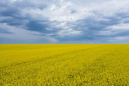 Blooming Rapeseed Field of Ukraine Against the Blue Cloudy Sky Aerial View Zdjęcie Seryjne