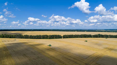 Harvester Machine to Harvest Wheat Field Working Aerial View