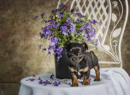 rotweiler: Puppy Dog with Flowers