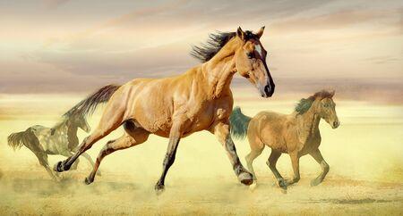 Cavalli che corrono selvaggi Archivio Fotografico