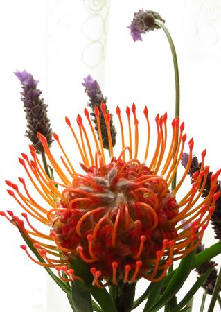 perianth: pin cushion and lavender