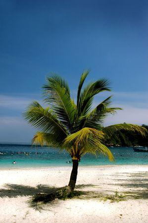 Coconut alone