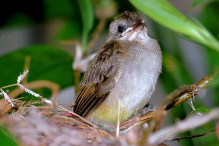 warblers:  bird Stock Photo