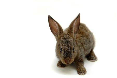 bugs bunny: Bunny