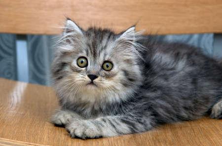 Kitten indoor