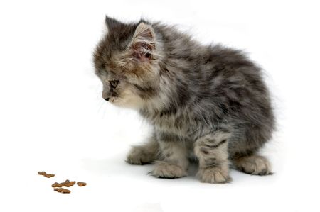 bred: Kitten and its food Stock Photo