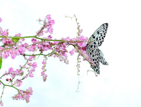 critters: Butterfly with pink flowers