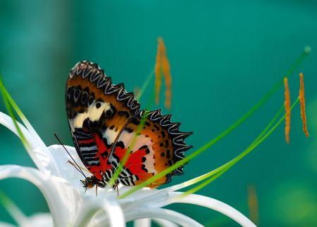 meta: Butterfly