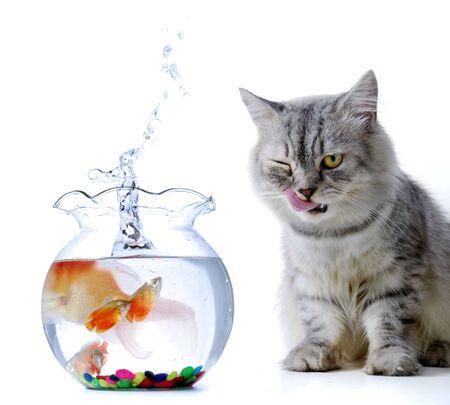 猫と魚の話 写真素材