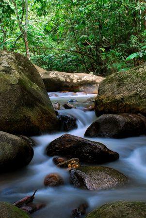 ジャングルの川