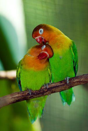 ly の鳥