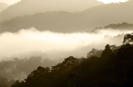bukit: Rain forest