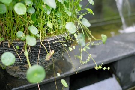 plantas acuaticas: Las plantas de agua